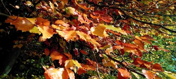 Mit Hesse durch den Herbst